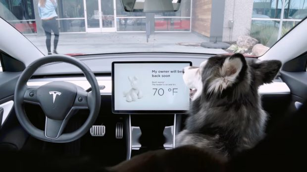 Le Dog Mode de Tesla